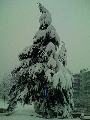 Hangzhou_Snow_1.jpg